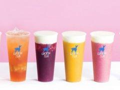 为什么创业者只选小鹿茶
